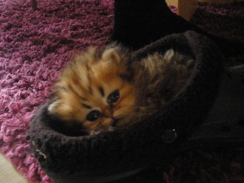 Charmeur, im Schuh ist es schön kuschelig...