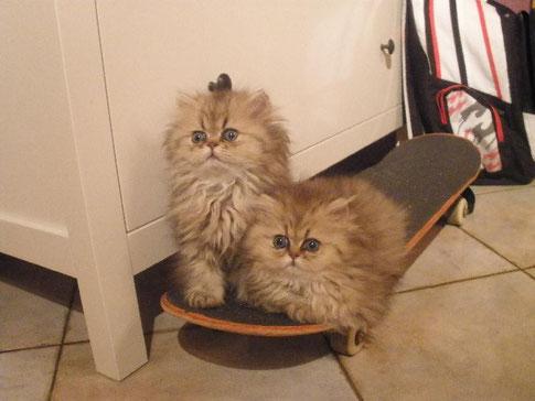 "Skateboard-Stars ""Brandy & Bambolina"""