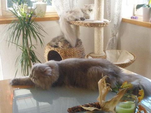 Romeo, Perli und Brandy & Bambolina
