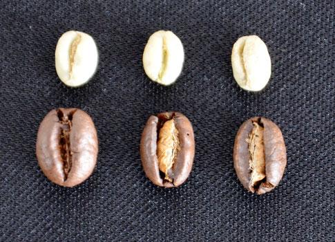 Bild 2: deutlich sichtbarer Größenunterschied zwischen Roh- und Röstkaffee