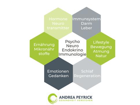 Psycho-Neuro-Immunologie kPNI Heilpraktiker Coesfeld Münster Andrea Peyrick Lifestylemedizin