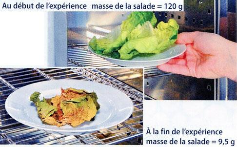 Salade mise à l'étuve pour déterminer sa masse de matière sèche. Source: Bordas 2015 p 37.