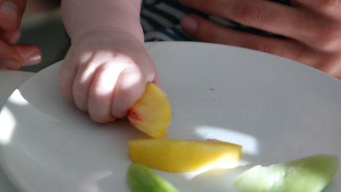Von Beginn an gaben wir dem Winzling weiches Obst und Gemüse. Pfirsiche, Kürbis und Wassermelone gehören zu seinen Leibgerichten. Sehr begeistert waren wir darüber, wie gezielt der Winzling nach dem Essen greift und es zum Mund führt.