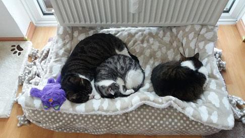 Anmerkung von Wackelkatzendosi -  ja, sie sehen entzückend aus wenn sie schlafen, unsere kleinen Nervbatzen ;-)