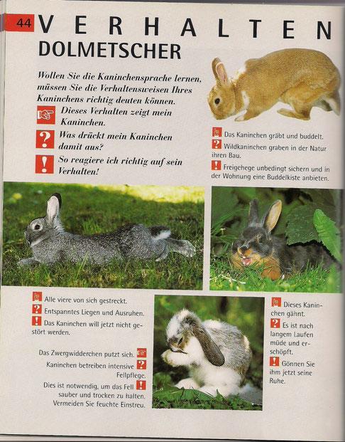 """Abbildungen aus Buch """" Kaninchen"""" vom GU TierRatgeber Verlag"""
