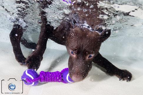 Bild: Hund unter Wasser in Berlin Seth Castell München Köln Hamburg Frankfurt