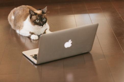 大分県のSNSマーケティングコンサルが語るオンライン接客