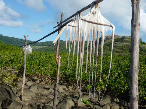 ourite (poulpe) séchée, spécialité de Rodrigues