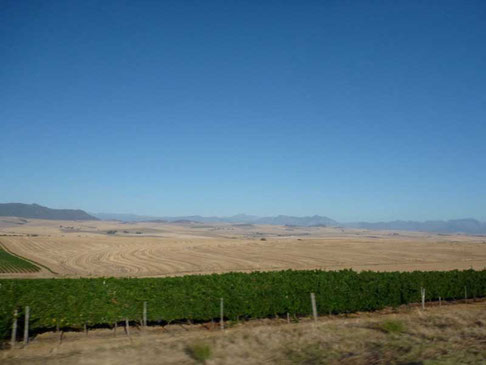 des champs de blé à perte de vue