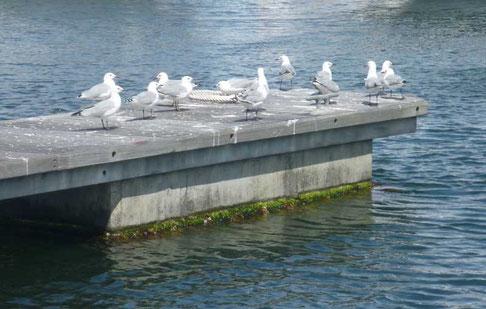 nos voisines de ponton