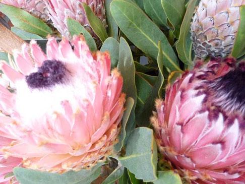 fleurs endémiques