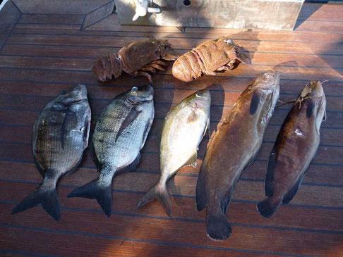 la pêche du jour d'inauguration de la nouvelle combi de chasse