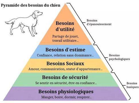 pyramide de maslow, chien, besoin du chien, épanouissement