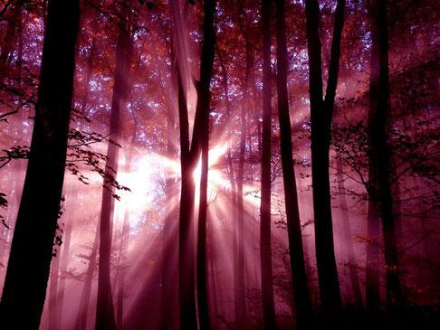 Wald rot