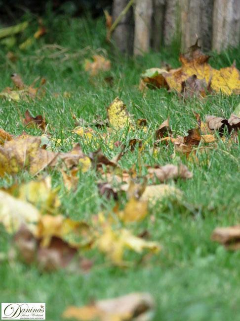 Bunte Herbstblätter im Garten bringen kreative Landart Idee - by Daninas-Kunst-Werkstatt.at