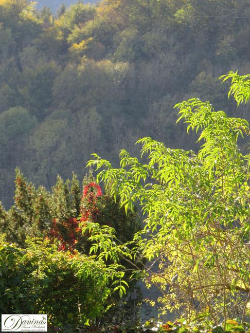 Herbst Bilder von Salzburg 2019. Herbst im Park by Daninas-Kunst-Werkstatt.at
