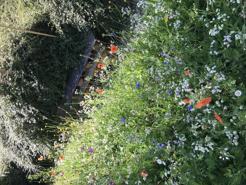 Bunte Wildblumen statt kurzer Rasen. Foto: Tobias Gohde