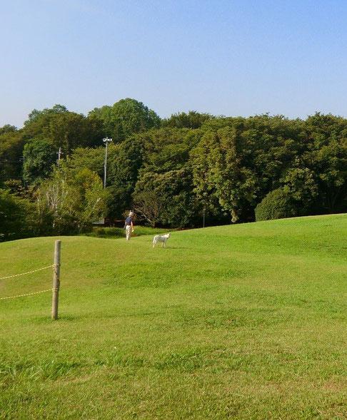 9月2日(2013) 屋上の眺め(調布市総合体育館):立地する神代植物公園の景観にあわせ設計されており、施設が半地下式に建てられている。屋上が小高い丘のようで気持ちのよい場所
