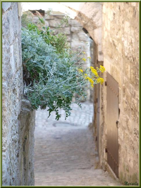 Immortelles au creux d'un mur, Baux-de-Provence, Alpilles (13)