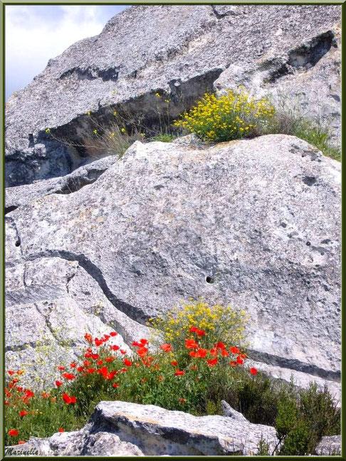 Coquelicots et fleurettes au creux des pierres, Baux-de-Provence, Alpilles (13)