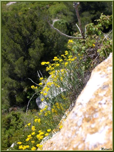 Fleurettes au creux des pierres, Baux-de-Provence, Alpilles (13)