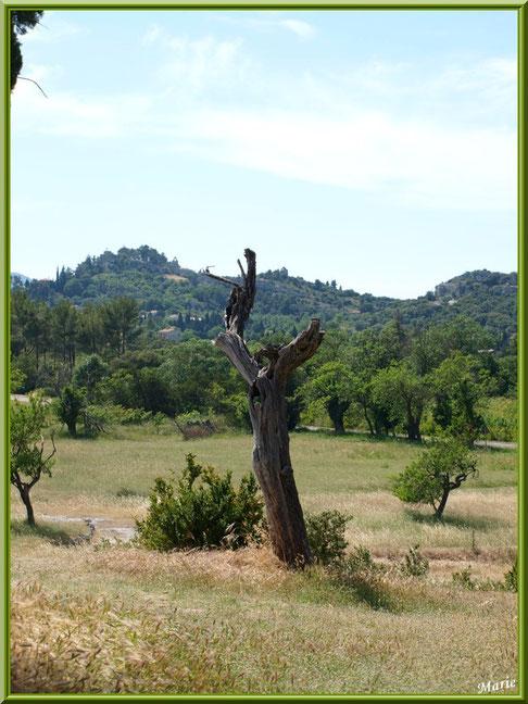 La campagne autour du village d'Eygalières dans les Alpilles, Bouches du Rhône