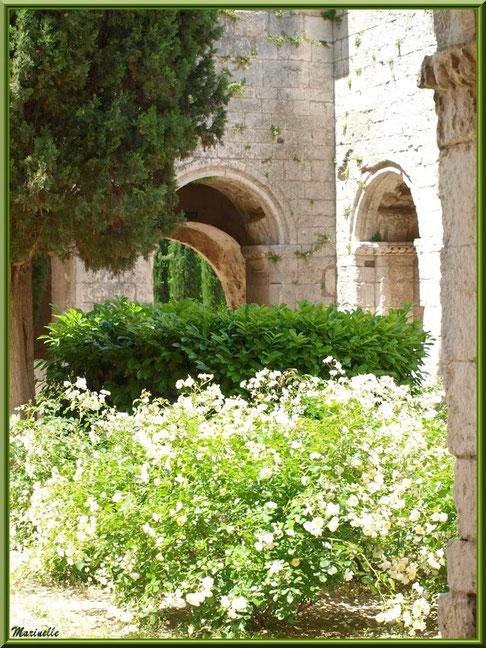 Jardin intérieur du cloître de l'abbaye de Silvacane, Vallée de la Basse Durance (13)