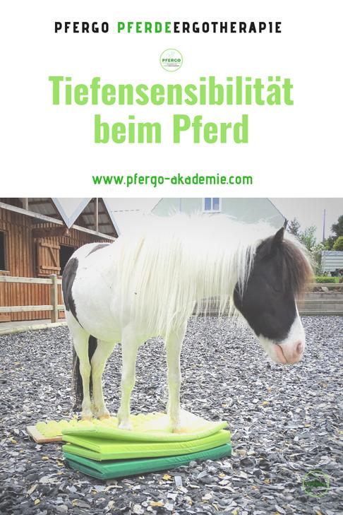 Mit PFERGO PFerdeergotherpaie - Ergotherapie für Pferde zu einer besseren Körperwahrnehmung für Dein Pferd!