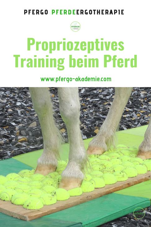 Mit PFERGO Pferdeergotherapie zu einer besseren Körperwahrnehmung Deines Pferdes!