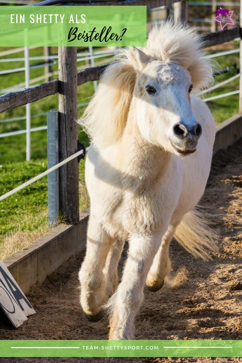 Shetlandpony als Beistellpferd Shetty