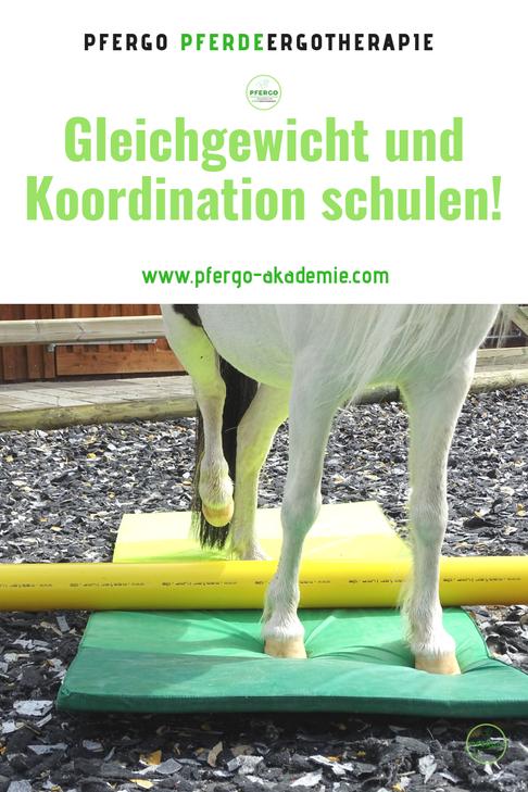 Die Körperwahrnehmung spielt bei Pferden eine große Rolle. Die Pferdeergotherapie kann Pferden zu einer besseren Körperwahrnehmung und damit zu mehr Trittsicherheit, Balance und Ausgeglichenheit verhelfen.