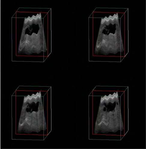 dog ultrasonography ultrasound / hund sonographie ultraschall