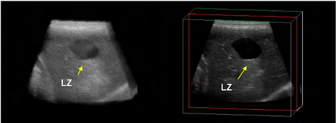 dog ultrasonography ultrasound / hund sonographie ultraschall