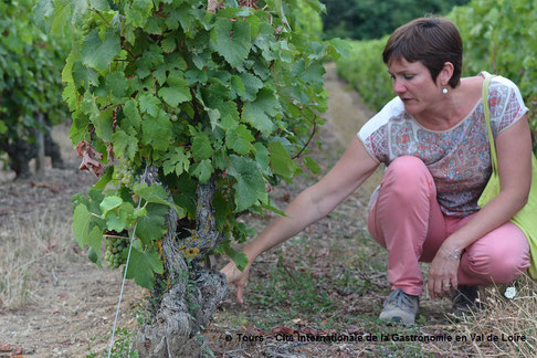 guided-wine-tours-in-the-Vouvray-vineyard-Loire-Valley-Amboise-wine-tastings-Rendez-Vous-dans-les-Vignes-Myriam-Fouasse-Robert