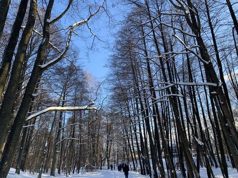 Die verschneite Landschaft in Lettland