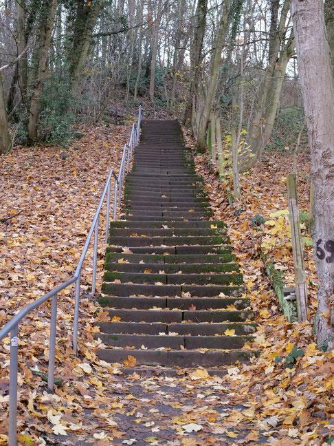 Abbildung 1 Treppe oberhalb Hinsenkampstraße, Bonn Dottendorf (re) Das Fließen des Untergrunds ist erkennbar. (Foto: Reichert)