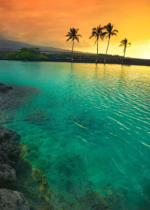 A harmonious photo of a calm Hawaiian ocean with relaxed palm trees.