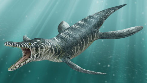 """Drawing of a Kronosaurus boyacensis by """"dinosaurpictures.org"""""""