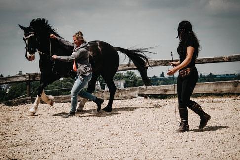Auch die Kommunikation mit dem Pferd am Boden will gelernt sein.