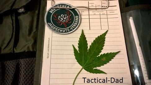 Ein handfester Fall für Jagdaufseher: Illegaler Anbau von  Cannabis / Marihuana in meinem Revier. Jetzt ist Folgendes wichtig: Spurensicherung, Diskretion  und Eigensicherung