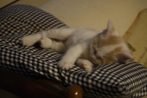 6・20我が家に来て安心して眠るフク