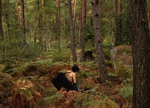 Un jour en forêt
