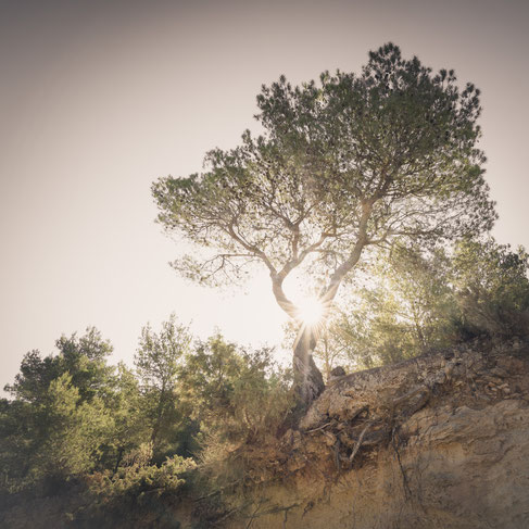 Ibiza nature sunrise tree