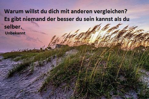 Dünen Gräser Wind am Meer