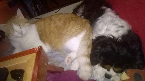 Hemera, qui fait la sieste avec son copain Hendrix 16/01/15