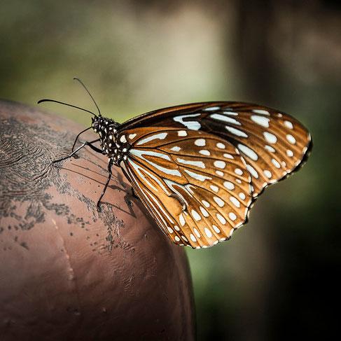 Cientos de mariposas revoloteaban a mi alrededor