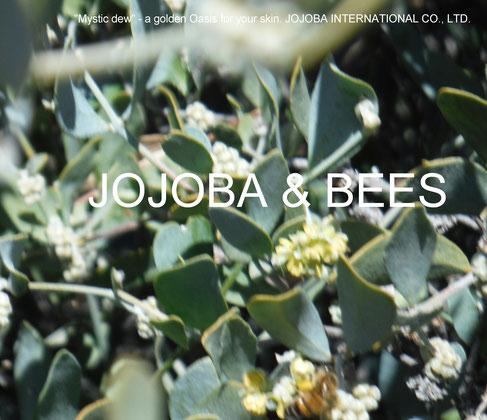 """❦ アリゾナホホバのお花もようやく咲いてきました。暖かい日和の中、みつばちもOrange Desert Globemallowのワイルドフラワーに加えてJOJOBA flowerの蜜に飛び交っています♪"""""""