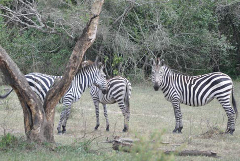 Animals in Lake Mburo national park dying of hunger