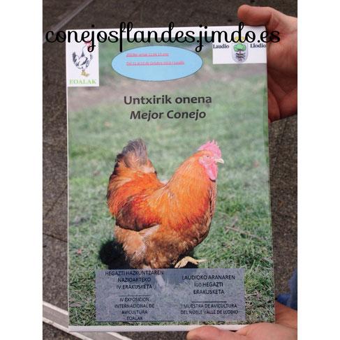 Premio a mejor conejo de la exposicion de Llodio 2013