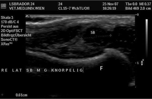 hund sonographie ultraschall / dog ultrasonography ultrasound